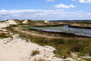 Dune and estuarine communies on Fortrose Spit, Southland support a range of at risk species. Photo: Anne Humburg