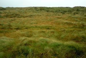 Dune system dominated by marram and exotic grass species, Fortrose, Southland (photo: Jesse Bythell).