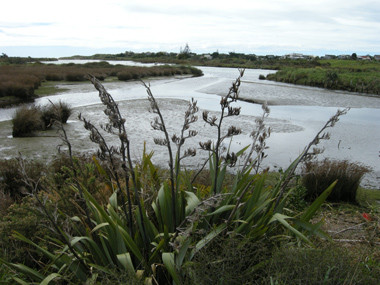 Waikanae Estuary. Photographer: John Sawyer.