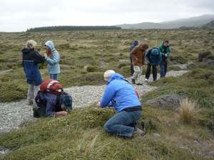 Members enjoying the plants on a conference field trip to Birdlings Flat in 2010. Photo: Jesse Bythell