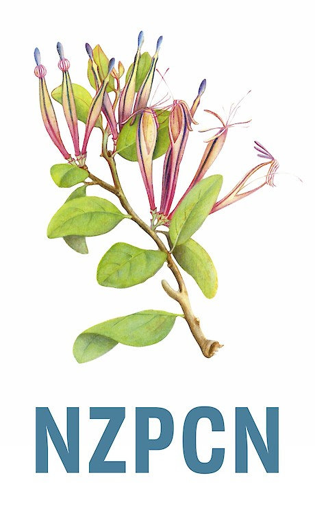 The Network logo is an illustration of Trilepidea adamsii - the extinct Adam's mistletoe.
