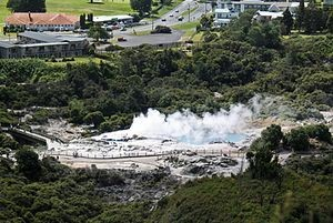 Geothermal vegetation at Whakarewarewa, Rotorua. Photo: Chris Bycroft.